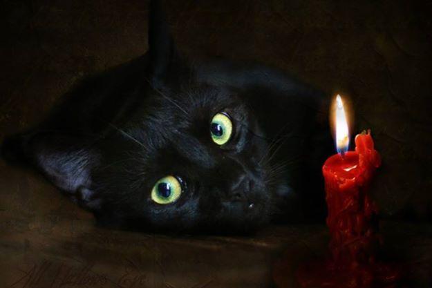 micio nero