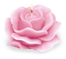 rosa_candela_helan